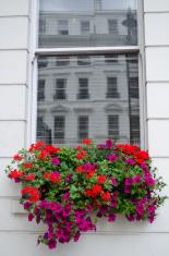 urban window and flower basket