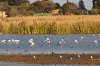 Flamingos in the sanctuary