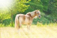 Horse in sunlight - Highkey