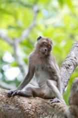 Sleeping monkey on the tree