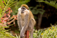 Small monkey looking up