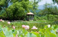 Gazebo in Lotus garden
