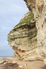 Bulbjerg bird cliff Denmark