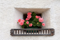 Little window with flowers