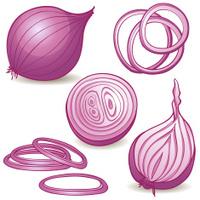 Onions Slice Vector