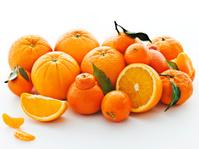 citrus family portrait