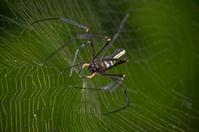 Spider&Web
