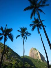 Rio de Janeiro Brazil Sugarloaf Mountain Palm Trees