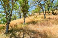 Pinnacles National Monument