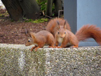 Two Funny Squirrels