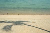 Coconut Shadow on the beach