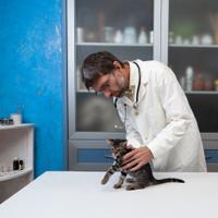 veterinarian examines a sick cat