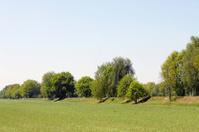 green tree field blue sky in spring