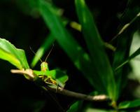 the grasshopper's face