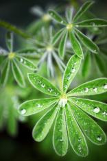 Rain Drops Plant Leaves.