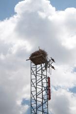 Base Station and Stork Nest