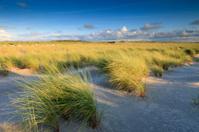 sand dunes along the Dutch coast