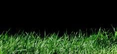 Grass. spring background