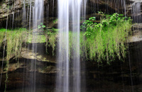 Waterfall with Spanish Moss