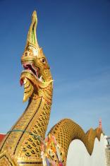 Buddhists dragon
