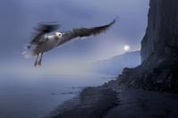Coast: Cliffs and Seagull