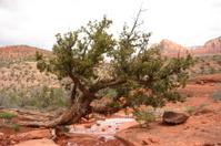 Tree Growing Sideways