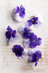 Viola edible flowers