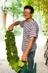 Tobacco farmers