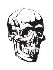 Human skull anatomy sketch