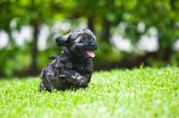 Black & Tan Puppy Running in the Grass.