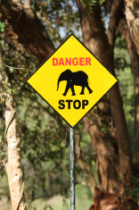 Elephant danger sign