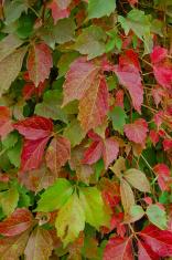 Verticle autumn colours