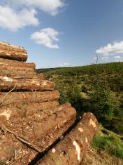 Piles Of Cut Logs