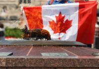 Canadian Flag at Centennial Flame