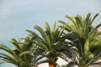 Three palm trees on cote d'azur beach