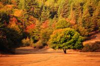 autumn in Bulgarian forest