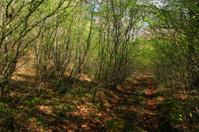 Wood path in wild Toscana