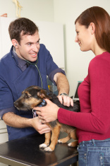 Male Veterinary Surgeon Examining Dog In Surgery