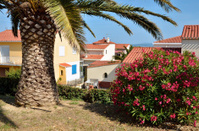 Palm tree and oleander at Saint Cyprien village in France
