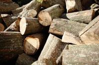 hornbeam firewood
