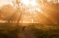 Sun Filled Morning