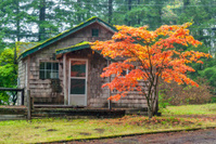Autumn tree in front on an old cabin