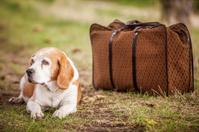 Dog  outdoor near a luggage