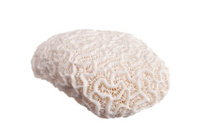 Big coral