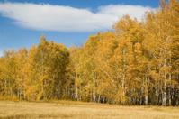Autimn landscape-3