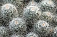 Exotic cacti