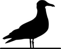 Seagull in Silhouette