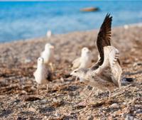 seaguls on the beach