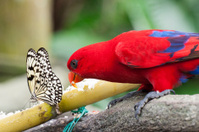 Butterfly and Parrot