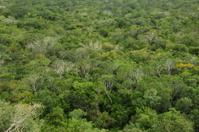 Rain forest,Coba,Yucatan,Mexico.